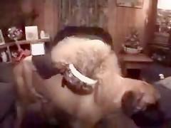 Big dog making his woman orgasm xxx animal