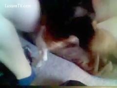 Amateur girl pounded her cunt by dog sex xxx