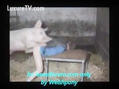 Dirty gay lets pig fuck him free at stalls