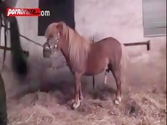 Horse porn hardcore videos xxx with comdom