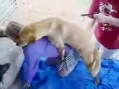 Big ass fatty slut lets her dog drilling her cunt free HD