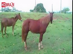 Horse porn fucking hardly outside for zoo xxx movies HD