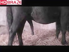Horse fucking gay at the stalls for animal porn HD