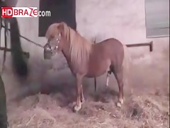 Amazing human fucks horse orgy with comdom