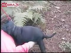 Big black dog digging wet cunt on outdoor trip HD zoo porno