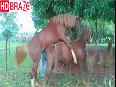 The natural sex of horse is perfect in animal porn video