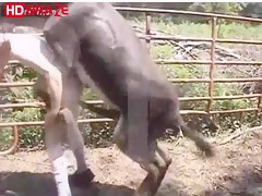 Bitch gay man fucks horse in his garden