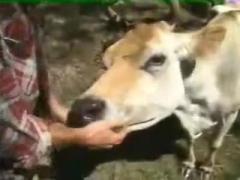 Mi vaca Fucking animal sex