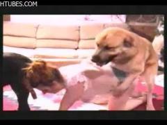 Dog Sex girl