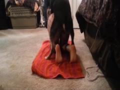 Dog digging orgy a woman