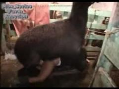 Fucking crazy animals porn