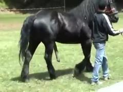 Horse party sex free xxx