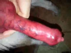 Long Cock of my dog