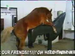 Amazing animal fucking horse hd sex