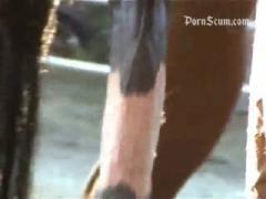 horse sex, horse free