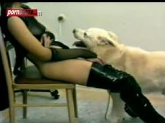 orgy Dog Deep Pussy The girl on room
