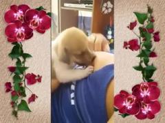 Dog Chubby sucking nice tits