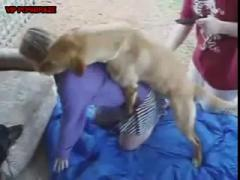 Golden Dog Try import Supper Dick Inside Tiny Pussy Girl