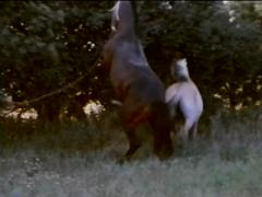 Woman Like Fucking Cock Horse